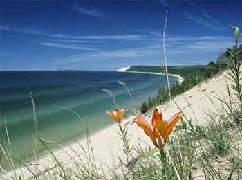 dune lily
