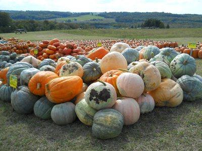 Harvest Festival in Boyne City